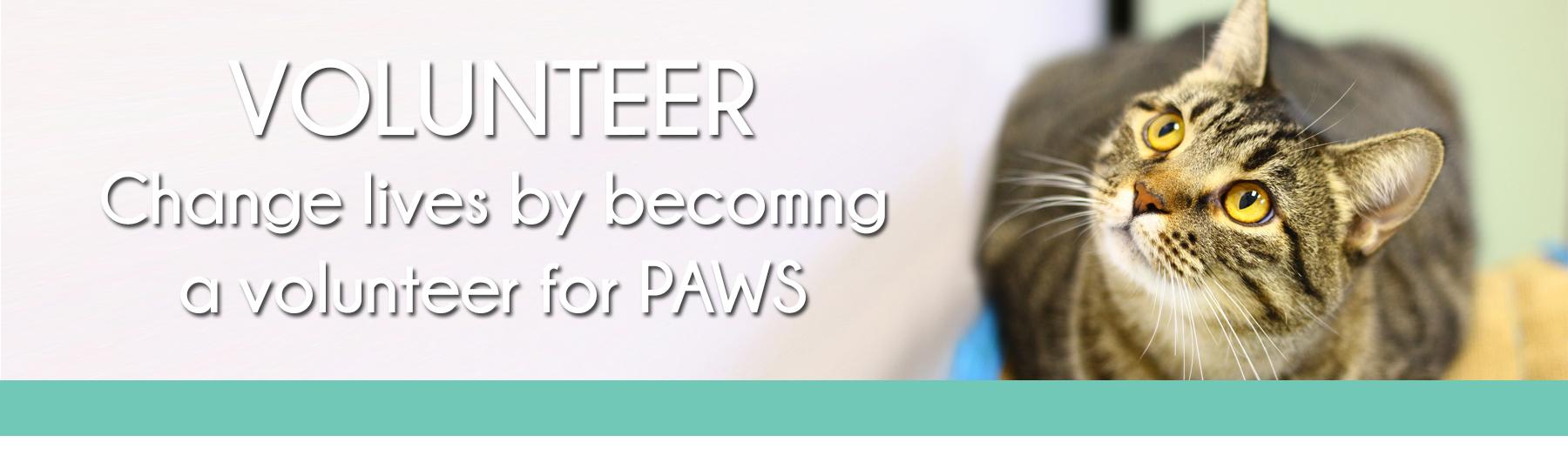 Volunteer page1
