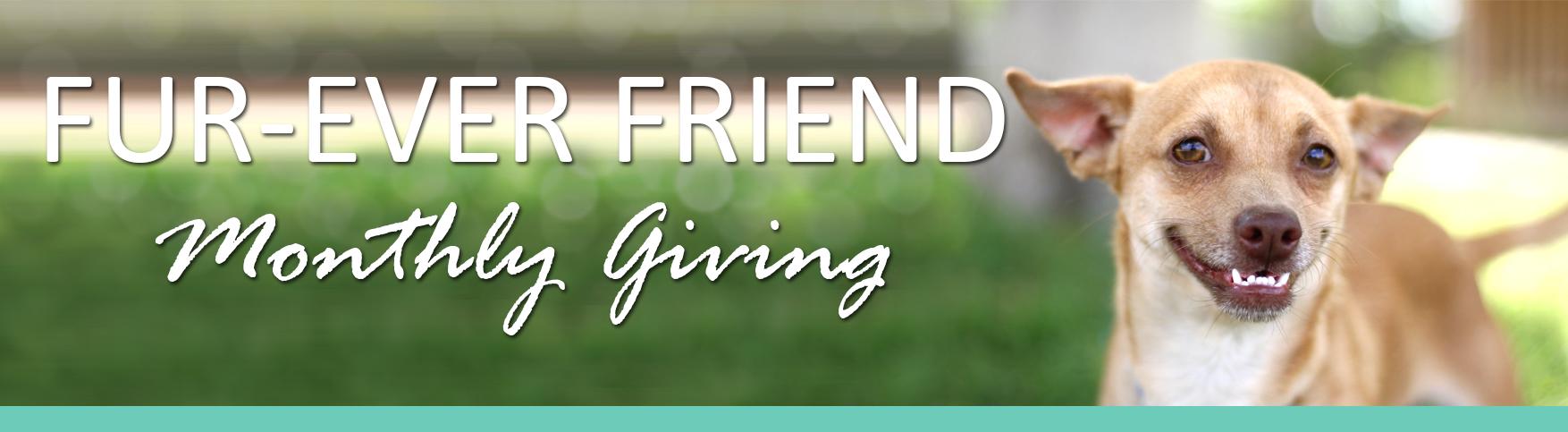 Fur-ever Friend banner