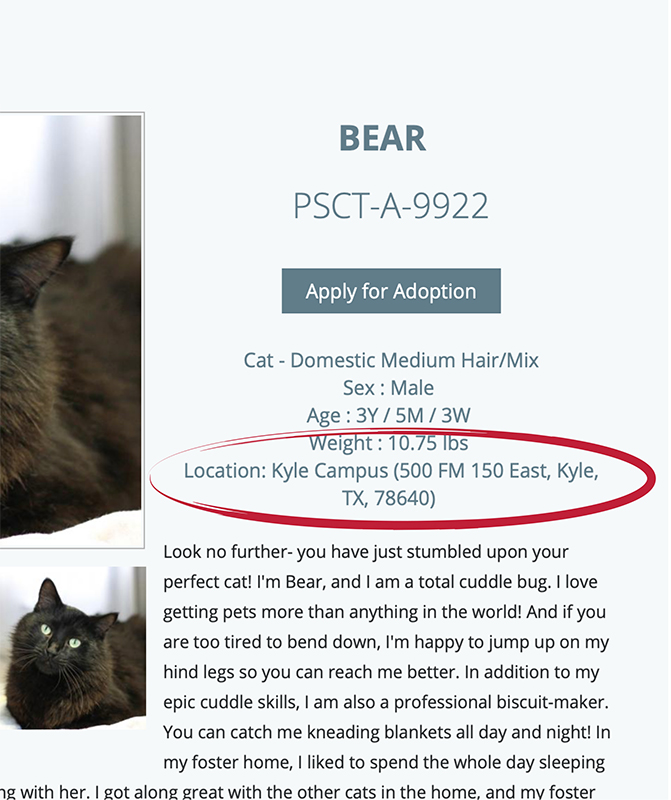 All Available Cats | PAWS Shelter of Central Texas